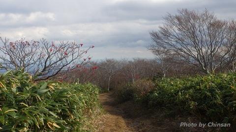 RIMG4613 (2).JPG